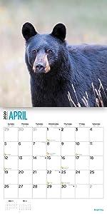2020 black bear calendar
