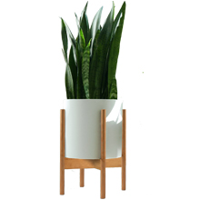 bamboo stand and pot