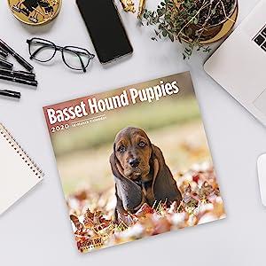 puppy wall calendar