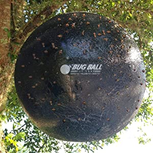 Bug Ball Hanging Tree