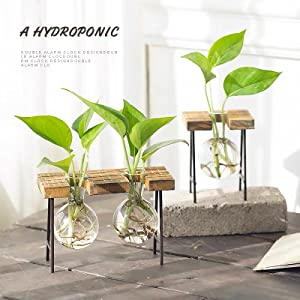 stand planter pot vase glass propagation indoor table flower hydroponic stands wood pots plants