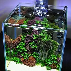 outdoor fish tank aquarium lava rock red