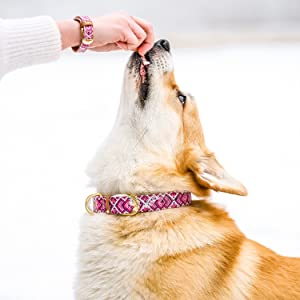 matching dog collar and bracelet