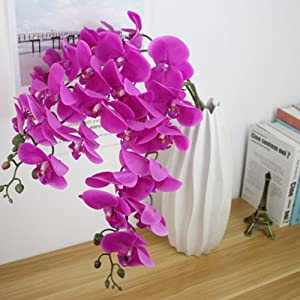 orchid flower in vase