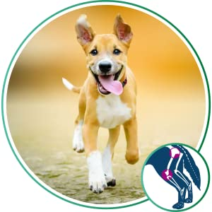 Cat and Dog Arthritis Pain Relief