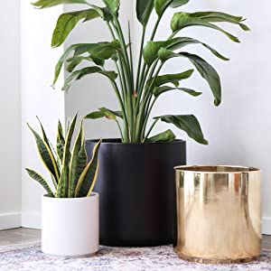 Ceramic Cylinder Planters White Black Peach Gold House Plants and Outdoor Plants