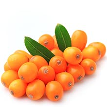 Sea Buckthorn is very soothing healing traditional skin remedy for irritations eczema dry skin