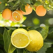 reed diffuser orange