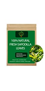 Fresh Sapodilla Leaves
