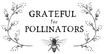Grateful for pollinators