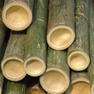 Cariloha, bamboo, women, underwear, boyshort, panty, viscose from bamboo, cooling, comfort, soft