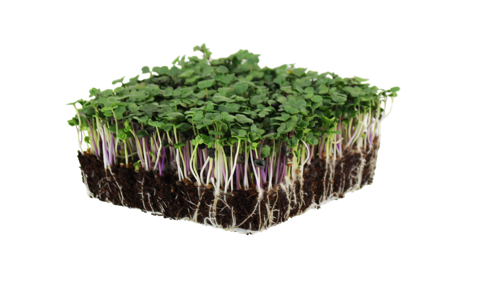 spicy salad mix microgreens , easy to grow microgreen ,mountain valley seed truelef market