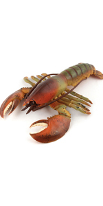 Lobster Sea Ocean Animal Model Figure Toys