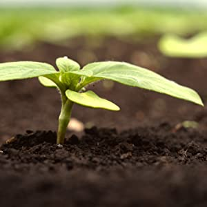 Organic Plant Food by Perfect Plants