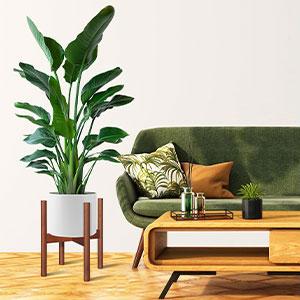 Bamboo Plant Holder