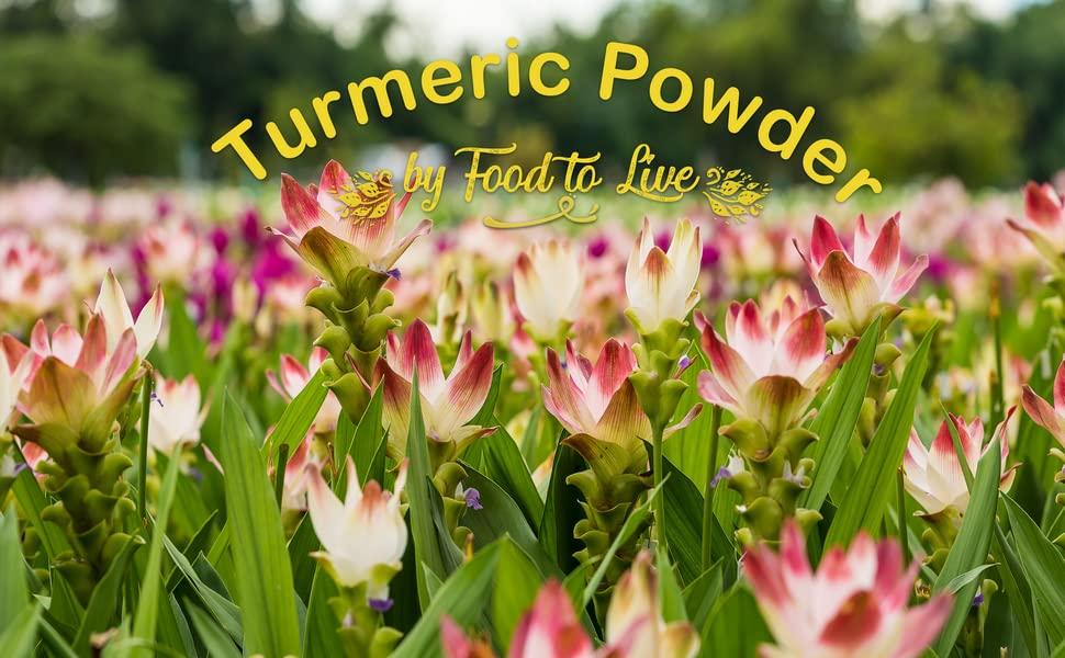 turmeric powder, food to live