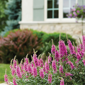 Close-up image of flowers in residential landscape