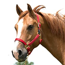 horse with halter