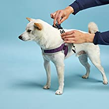 how to wear simple step in harness gooby for small dog