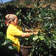 java trading coffee farm farmer woman sustainability social responsibility plant bean harvest seed