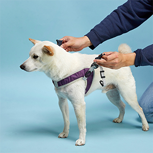 gooby simple step in for small dog easy to wear