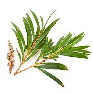 hair serum for frizzy hair organic moisturizer hair thickener argan oil hair hair grow treatment