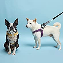 gooby simple step in 3 small dog harness