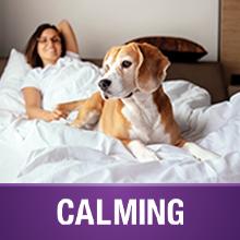 VetIQ Calming Chews for Dogs