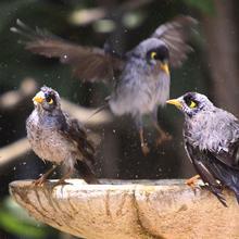 Safe for Bird Baths