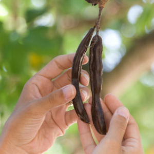 Carob pods containing pinitol, antioxidants, and calcium make Teeccino a healthy coffee substitute