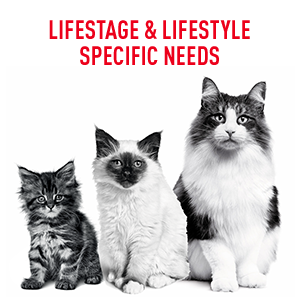 Royal Canin has formulas for kittens, adults & senior cats with lifestage & lifestyle specific needs