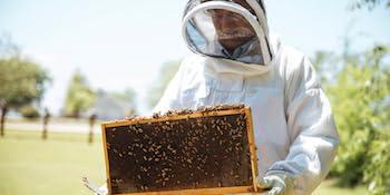 honey natural healthy raw unfiltered pasteurized hive beekeeping beekeeper beehive beesuit