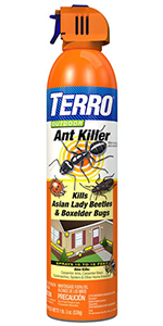 ant killer, terro, ant bait, insect control