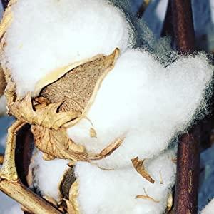100 % Cotton