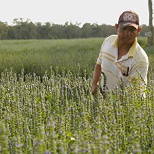 chia farmer