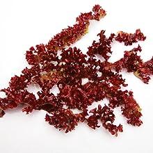 Persian Silk Tree Bark Extract sea kelp iodine skin skincare eyes eyelids bags dark circles puffy
