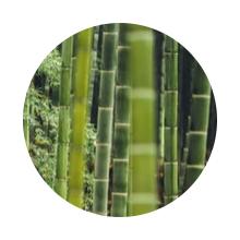 Organic Sustainable Safe Bamboo