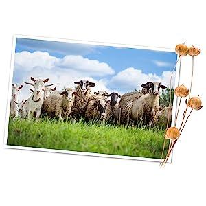living dreams yarn fiber sheep goats meadow grass flax nature sustainable farm