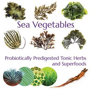 entil, chia seed, seasame seed, Arabinogalactan, kombu, wakame, bladder wrack, grape stone, sea fern