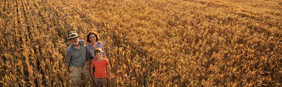 Virgin Wheat, Einkorn