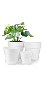 7 inch plant pot