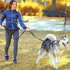 dog leash sene
