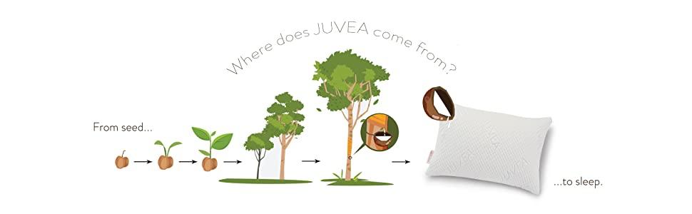 juvea natural latex pillow tree lifespan