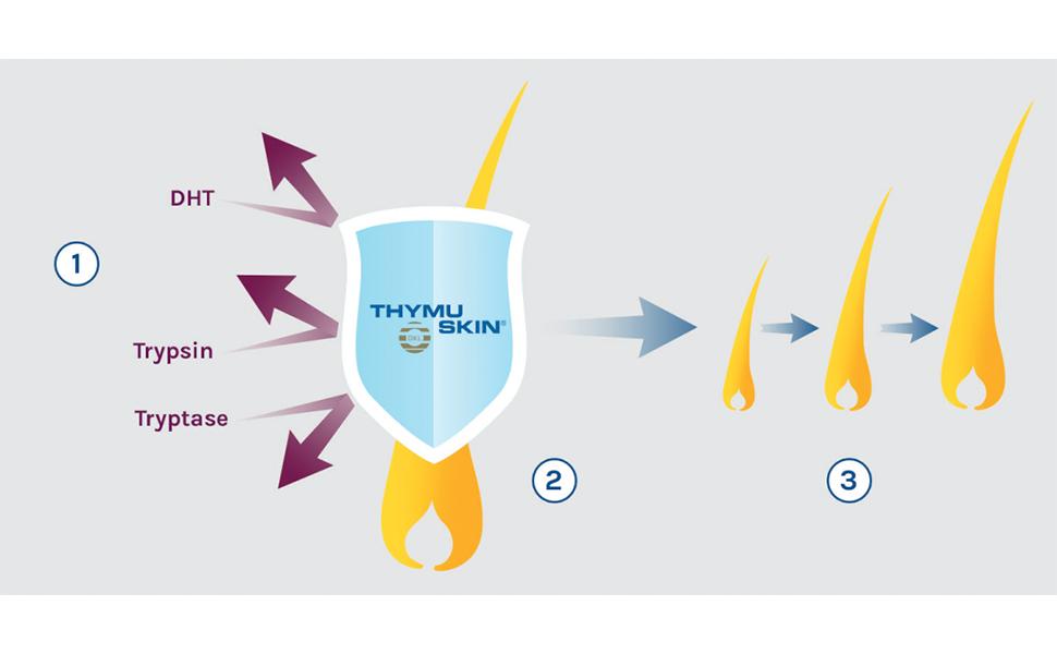 How Thymuskin Works