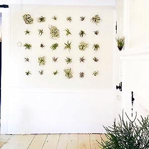 artak air knot airknot air plant holder tillandsia house plant vertical garden hanging wall planter