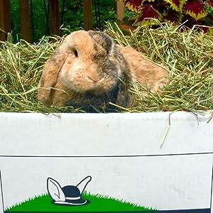 Rabbit Hole Hay