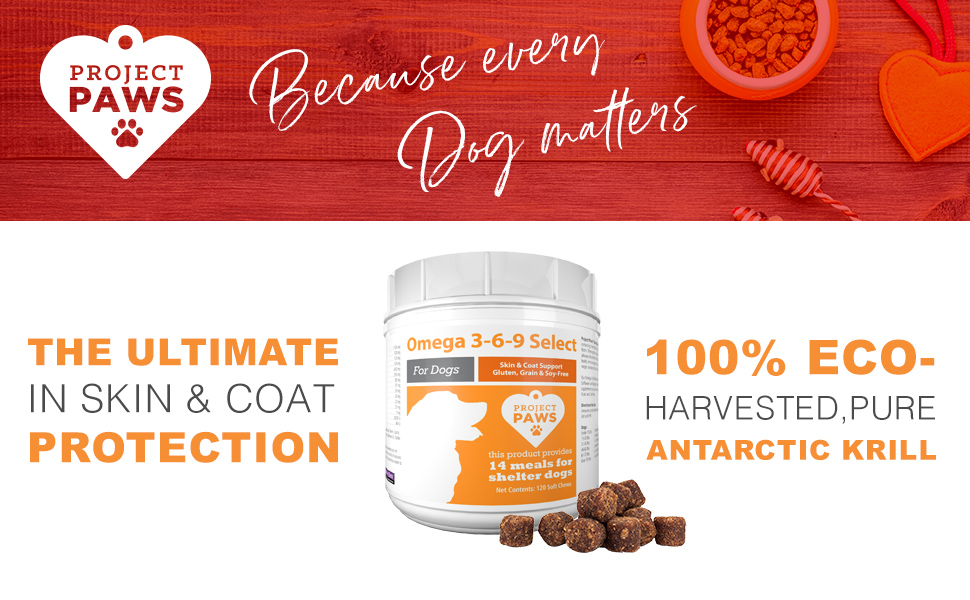 skin and coat, krill oil, itchy skin, dry skin, dogs healthy dog, allergies Omega-3