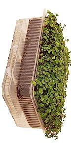 microgreen growing trays self watering