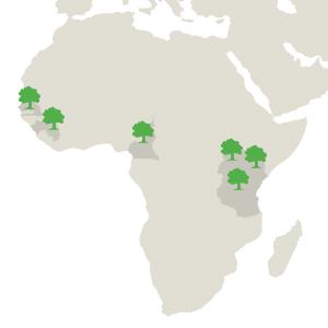 where we plant trees