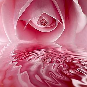 rosehip sead oil, eye cream for women, eye cream for men, eye cream, anti aging eye cream, skin care